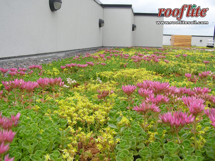 Exceptional We Used The Optigreen Drainage Profile From Conservation Technology And  Installed Sempergreen Green Roof Sedum Mats.